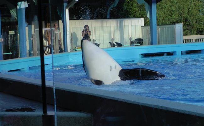 Dine with Shamu at SeaWorld Orlando