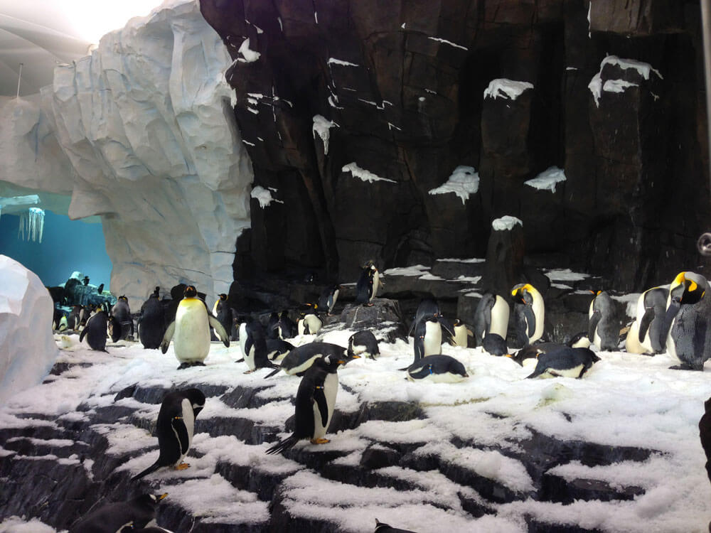 Parks News: SeaWorld Orlando Opens Antarctica, the Largest Expansion in Its History