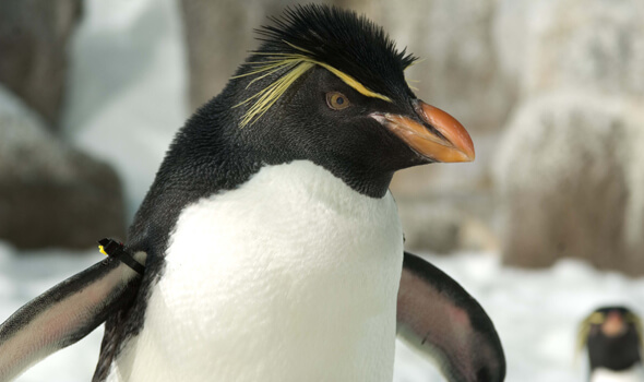 We're Headed to SeaWorld -- What Would You Like to Know About Antarctica?
