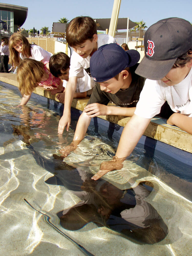 What to do in Los Angeles - Aquarium of the Pacific