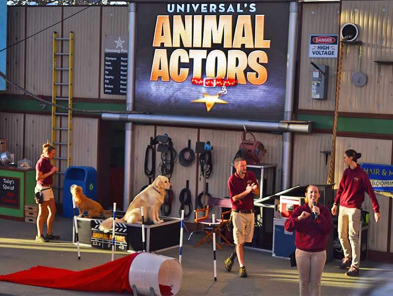 Not-to-Miss Universal Studios Hollywood Attractions and Shows - Animal Actors