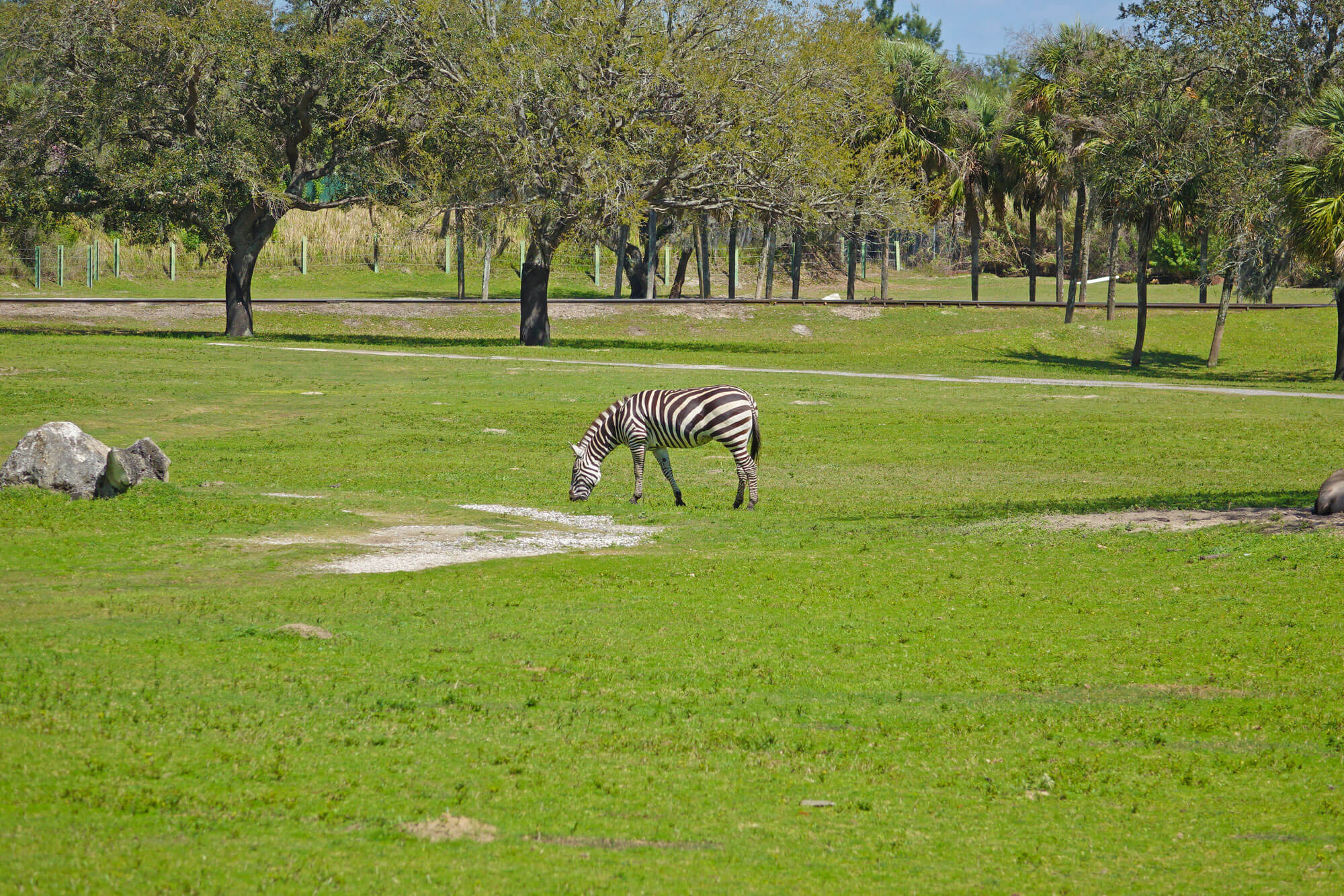Why We Love Busch Gardens 39 Serengeti Safari Experience