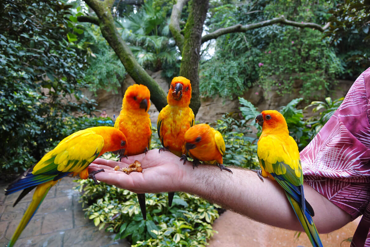 Discovery Cove - Aviary