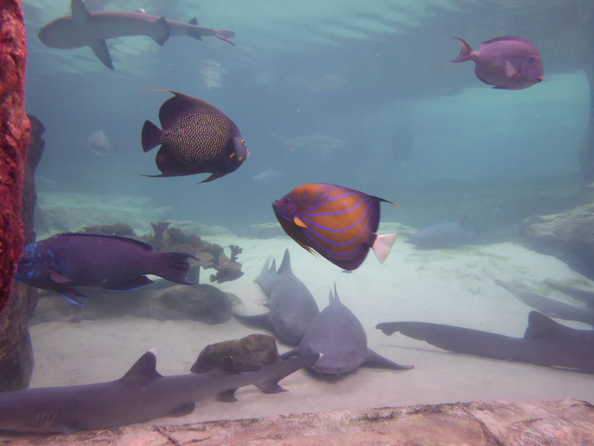 Discovery Cove - shark tank