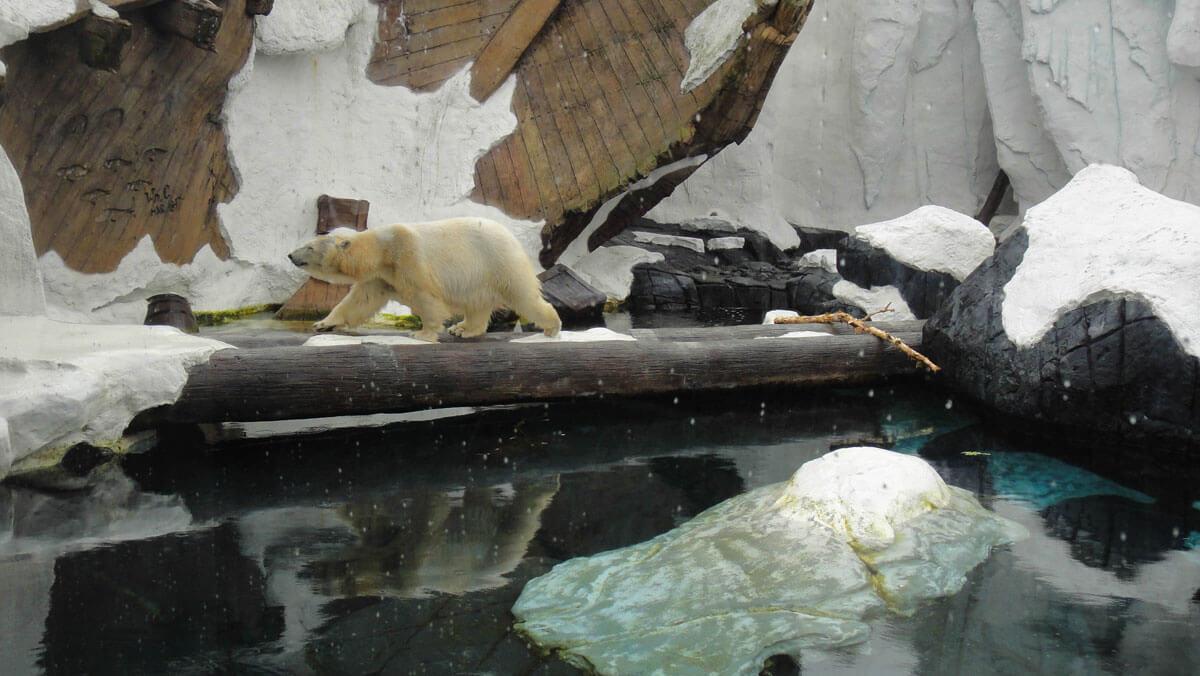 Maximize your time at SeaWorld San Diego - Wild Arctic Exhibit