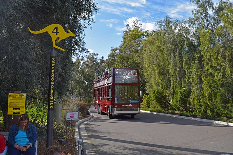 10 Not-to-Miss San Diego Zoo Exhibits and Attractions - Bus