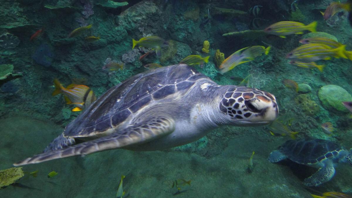 Theme Park Resolutions - SeaWorld San Diego