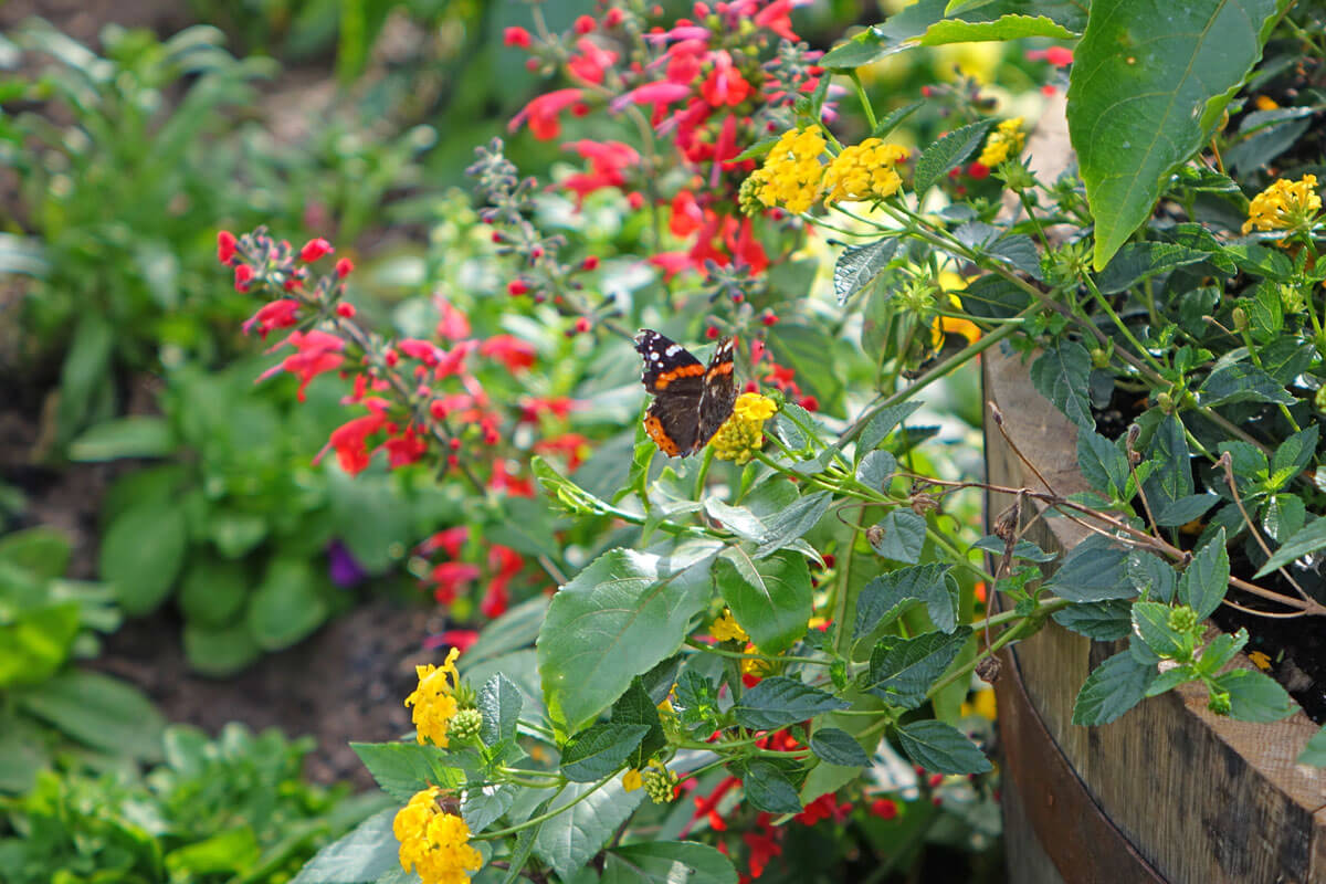 Epcot Flower and Garden 2017 - Butterfly