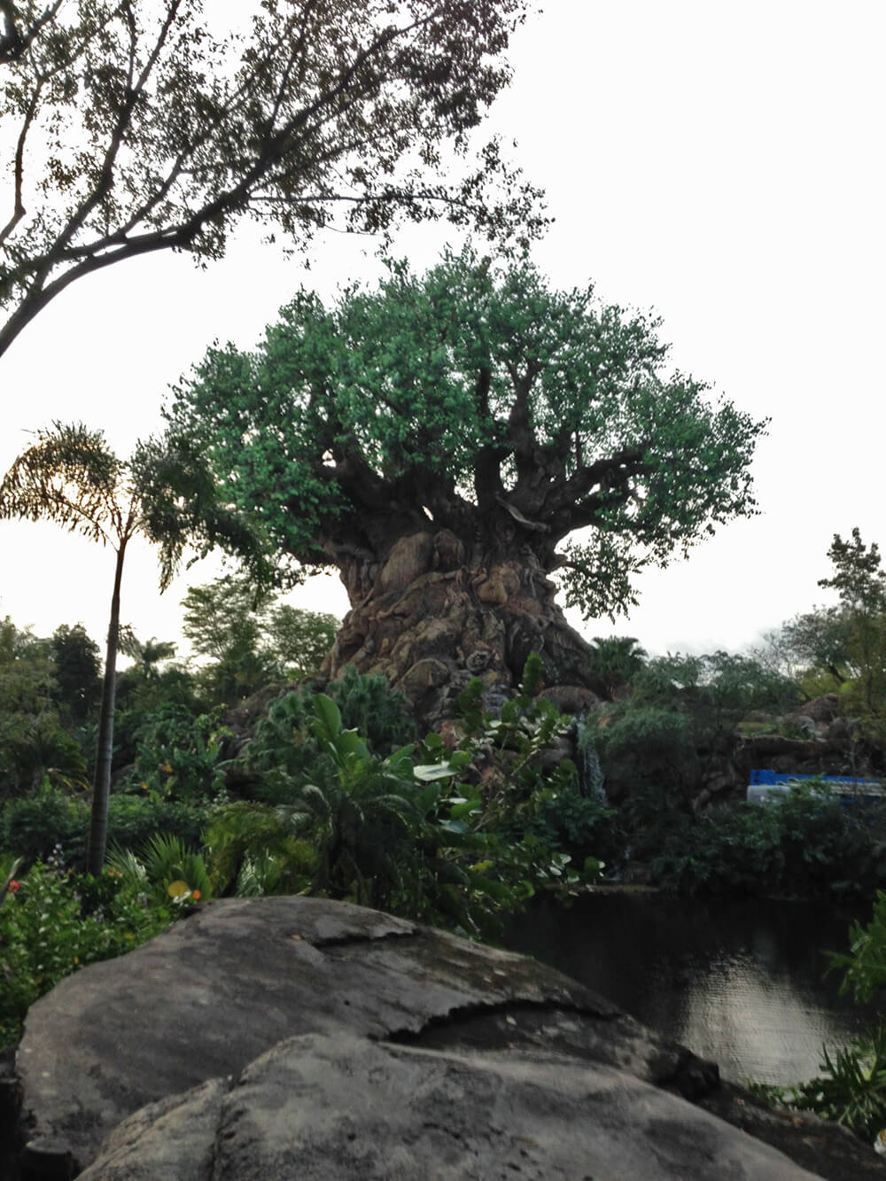 What to Expect at the Disney World Marathon - Tree of Life