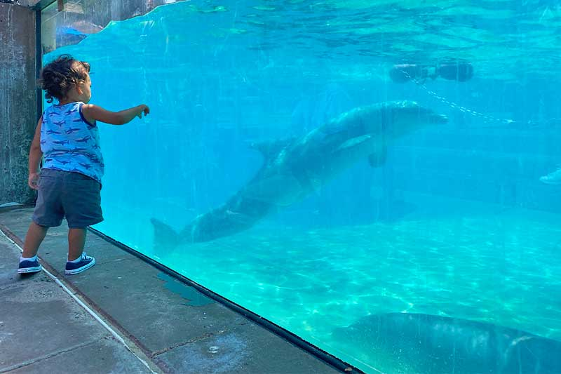 Tips for Taking Toddlers and Small Children to SeaWorld San Diego