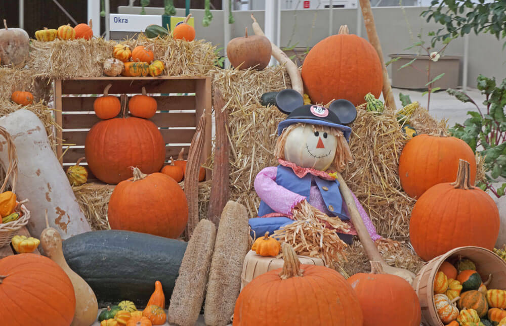 The Hoppiest Signs of Fall Around the Orlando Theme Parks
