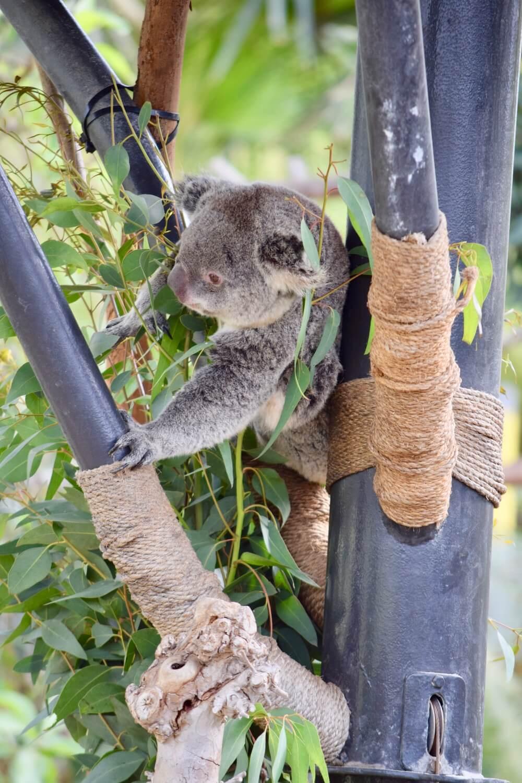 San Diego Zoo Tips -