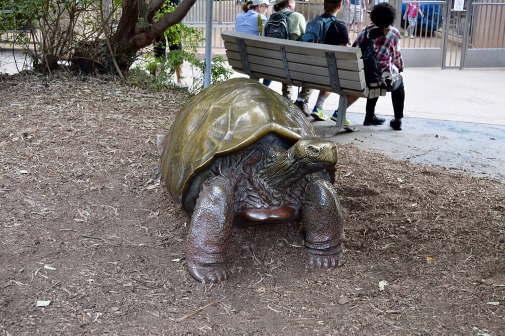 San Diego Zoo Tips - Brass Turtle at San Diego Zoo