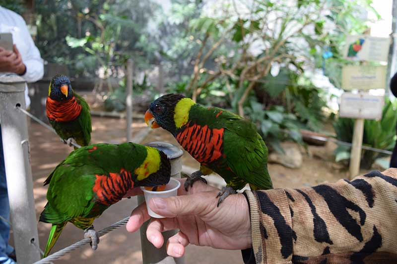 San Diego Zoo Safari Park Tips - Feed the Lorikeets