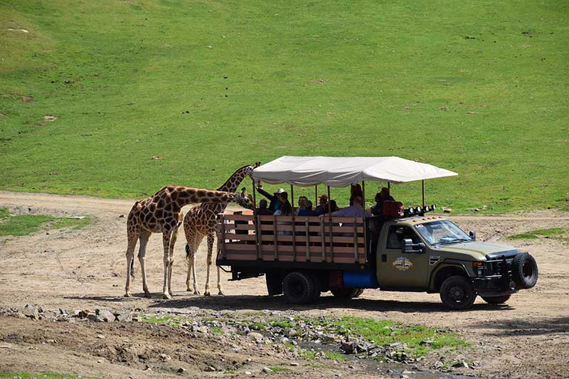 San Diego Zoo Safari Park Tips - Choose a Safari or Animal Encounter