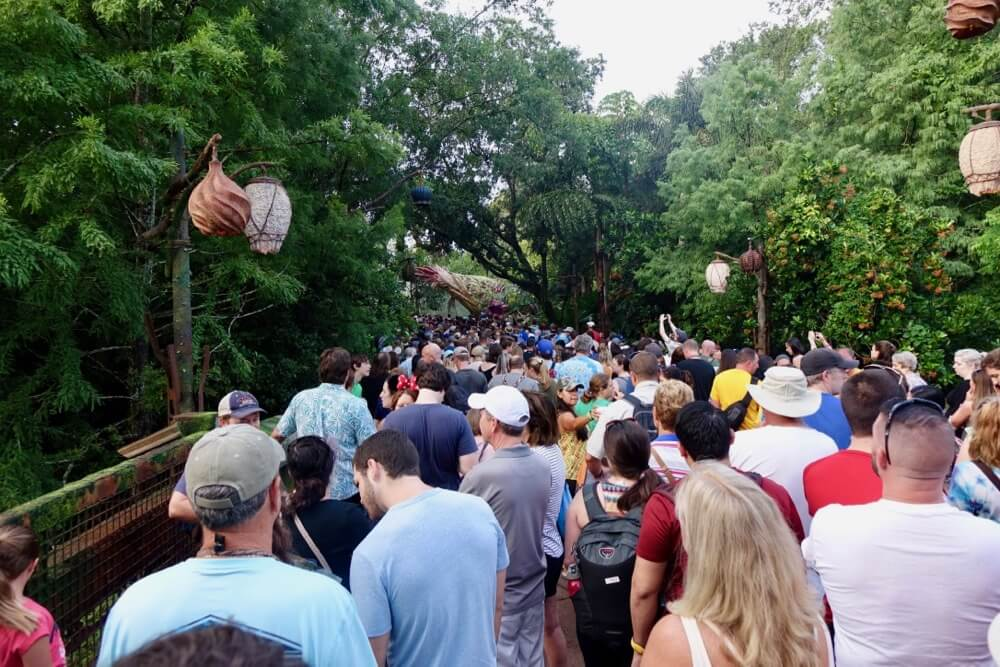 Thanksgiving at Disney World - Pandora Crowds