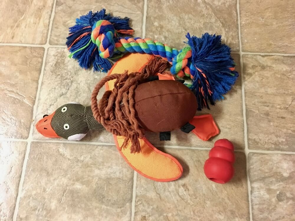 Bringing Pet to Disney World - Dog Toys