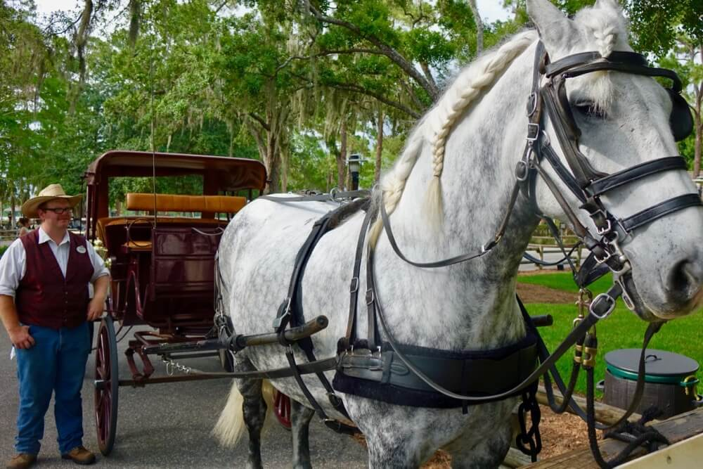 Thanksgiving at Disney World - Horse Carriage Ride at Fort Wilderness