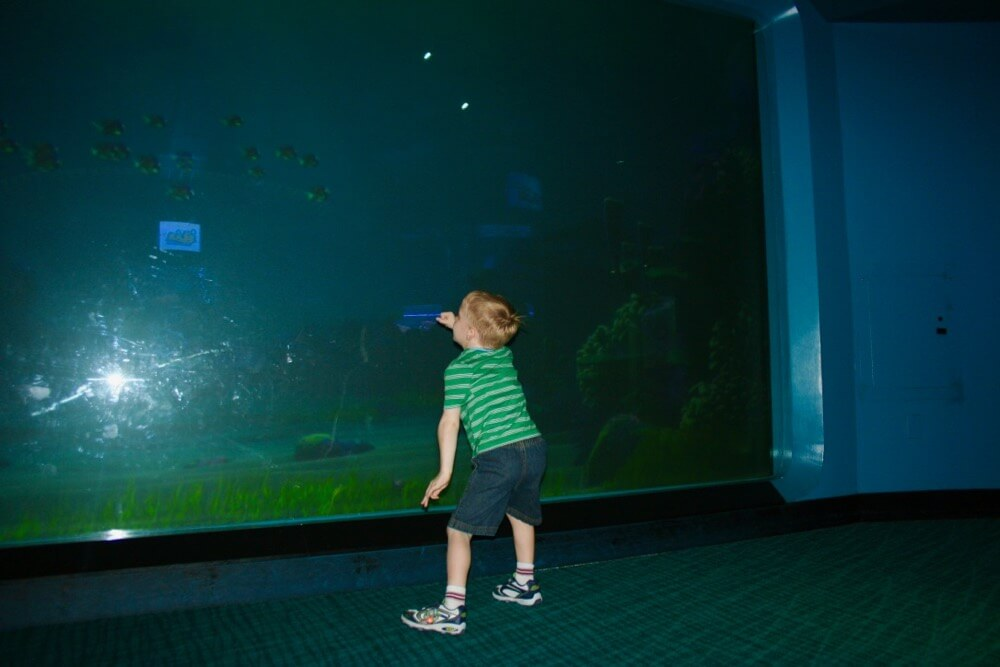 The Secret History of Disney Rides: The Seas with Nemo & Friends - The Seas With Nemo Aquarium