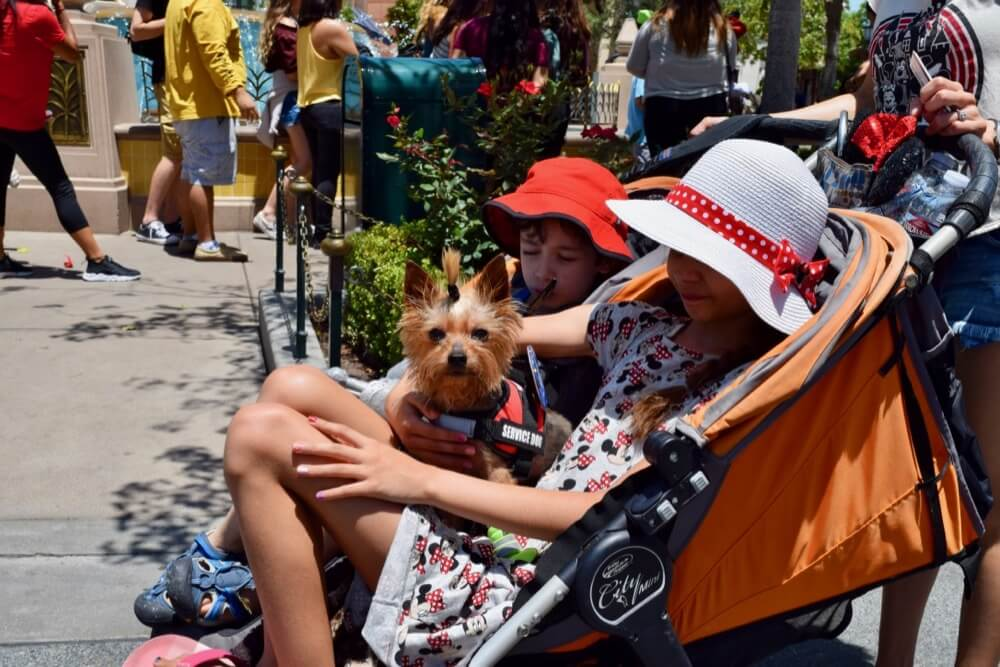 Disneyland Disability Access Service - Disney California Adventure Therapy Dog
