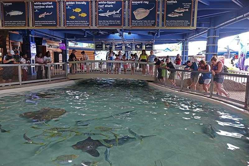 SeaWorld Orlando Tips - Interact with Animals