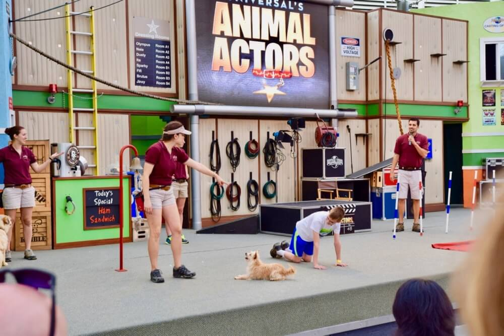 1017universal-animal-actors