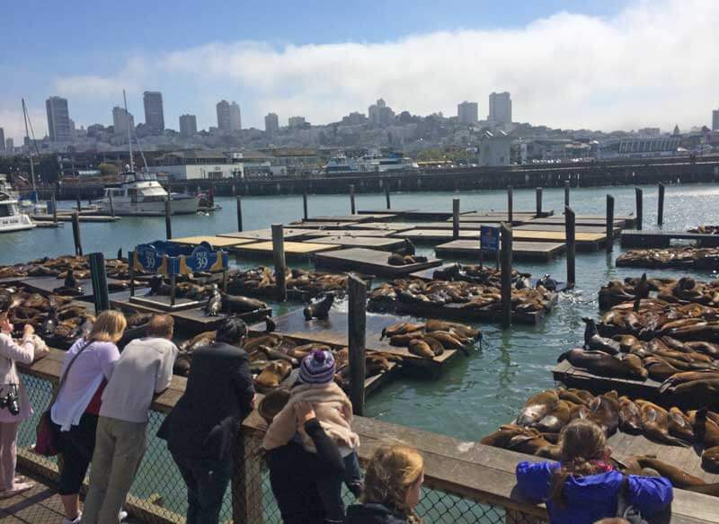 Tips for Visiting San Francisco with Kids - Sea Lions at Fisherman's Wharf