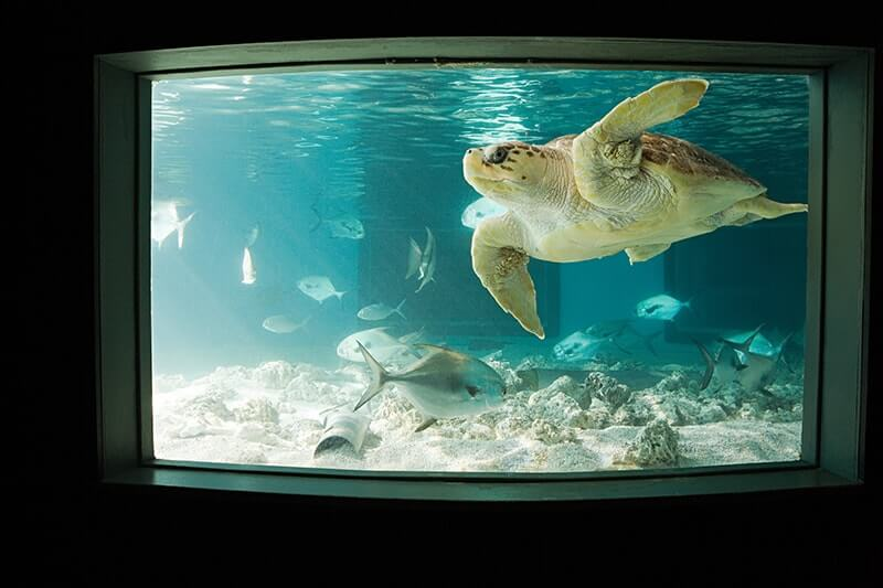 Top Things to Do in Boston with Kids - New England Aquarium