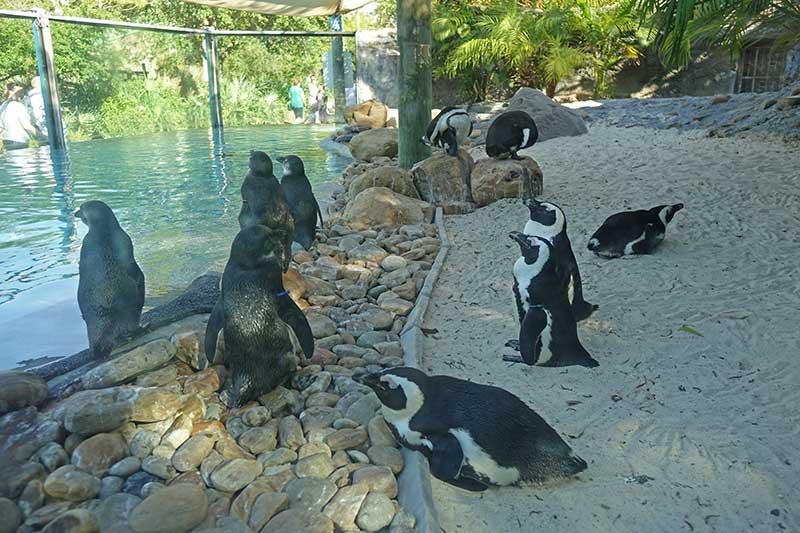 Busch Gardens Tampa - Penguins