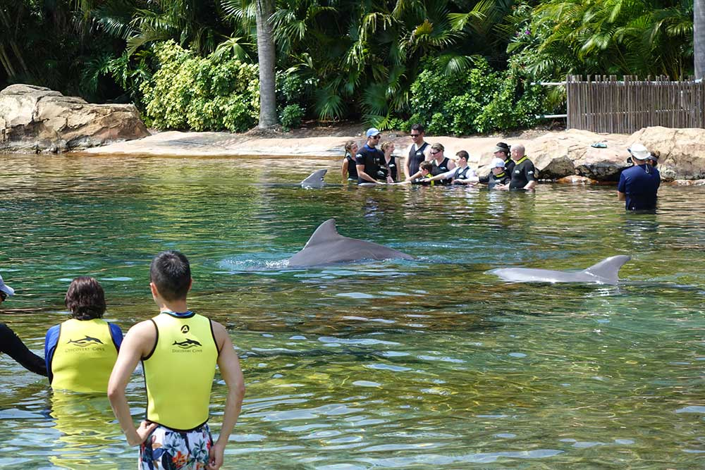 Discovery Cove Dolphin Swim - Fins