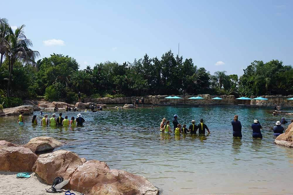 Discovery Cove Dolphin Swim - Groups