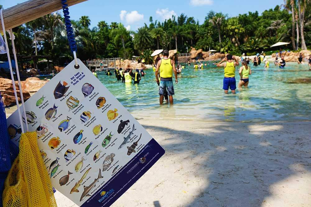 Discovery Cove Orlando - The Grand Reef