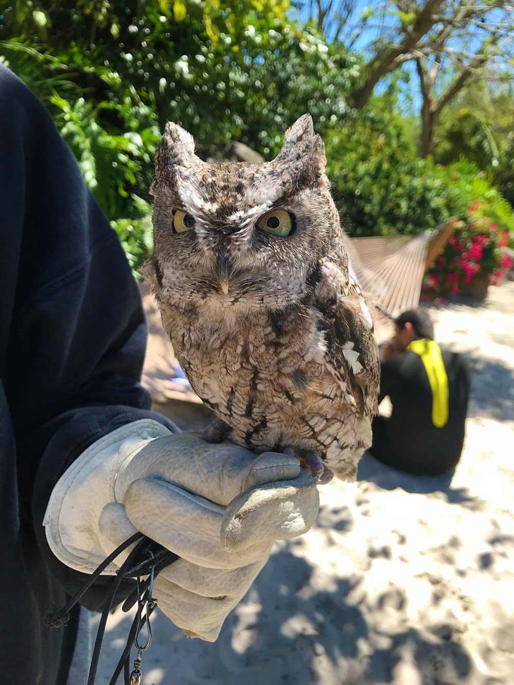 Discovery Cove Orlando - Owl
