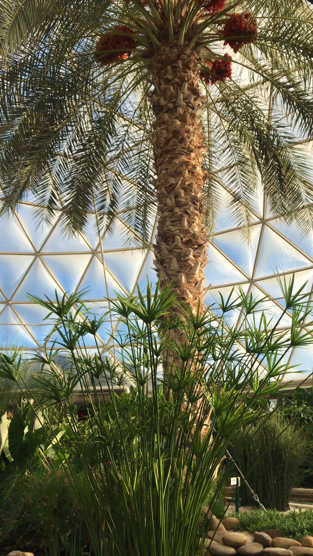 The Frog Family's Top 5 Epcot Hidden Gems