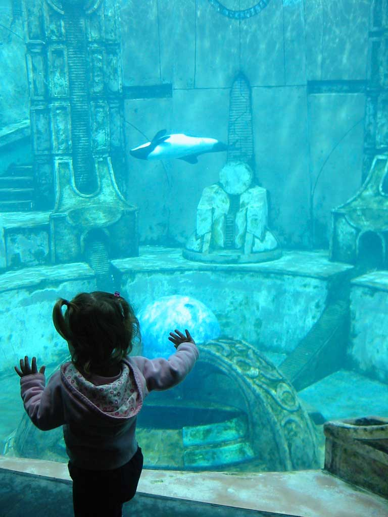 Tips to Maximize Your Time at SeaWorld San Diego - Animal exhibits