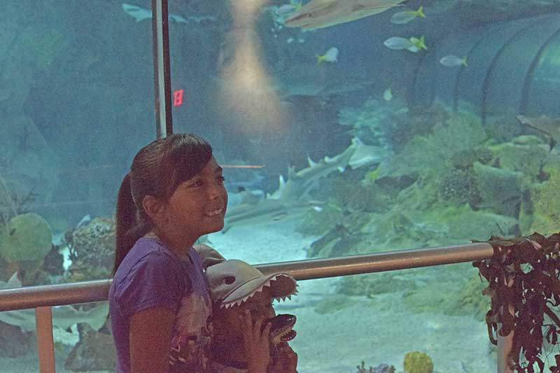 SeaWorld San Diego Shows and Attractions - Shark Encounter