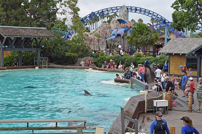 SeaWorld San Diego Shows and Attractions - Dolphin Days