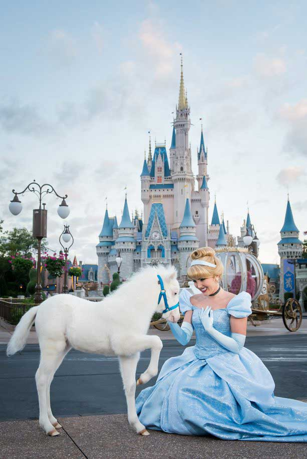Lilly, Cinderella's New Pony