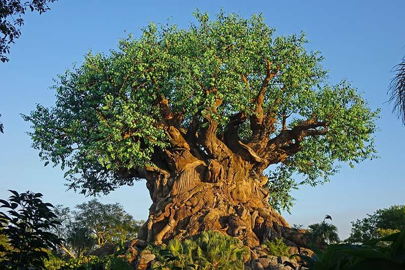 Best Theme Parks in Orlando - Tree of Life