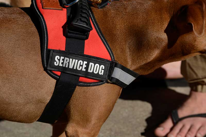 The Scoop on Service Animals at Disney World