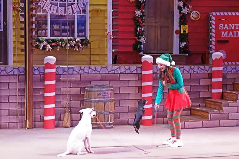 SeaWorld Christmas Celebration - Pets Ahoy Holiday Spectacular