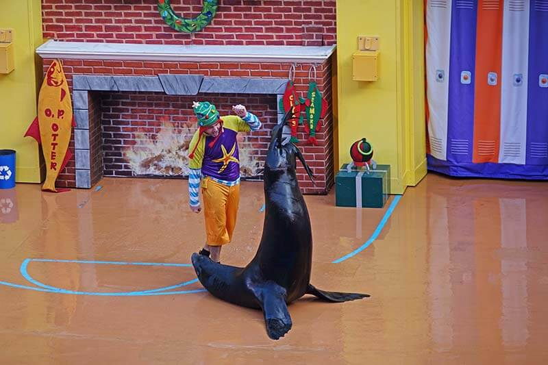 SeaWorld Christmas Celebration - Sea Lion High: The Christmas Special