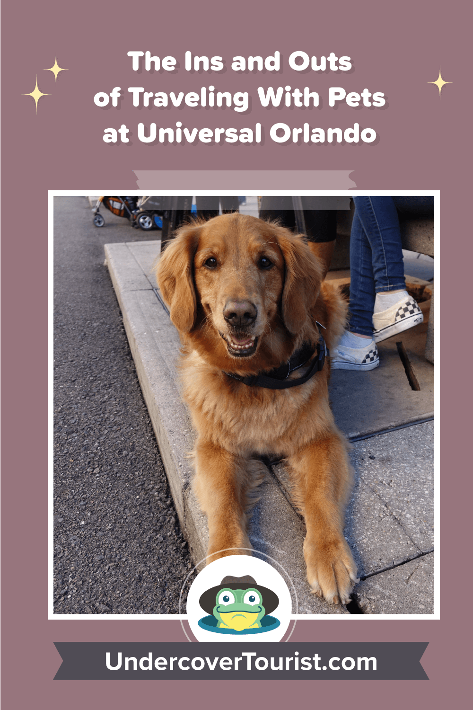 Pets at Universal Orlando - Pinterest