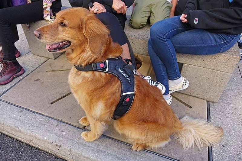 Pets at Universal Orlando - Service Dog