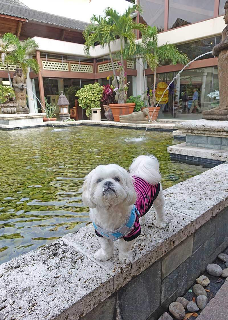 Should I Take My Pet to Orlando? Our ~Toadally~ Terrific Tips and Considerations