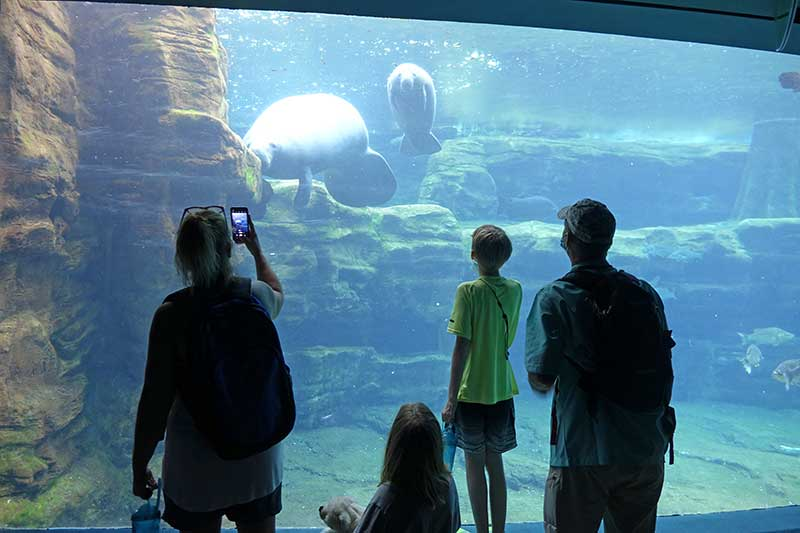 All of the ~Splashin'~ Details for Your Next SeaWorld Orlando Trip