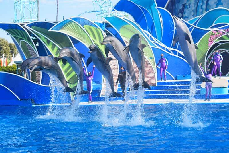 Best SeaWorld San Diego Shows and Attractions