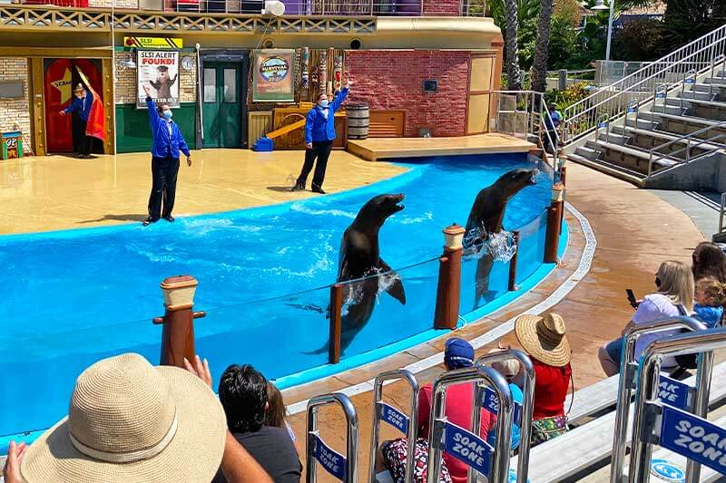 Diving into the Details from SeaWorld San Diego's New Zoo Days