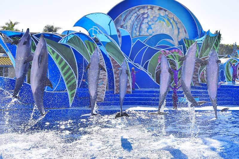 15 Tips to Make the Most of Your Time at SeaWorld San Diego