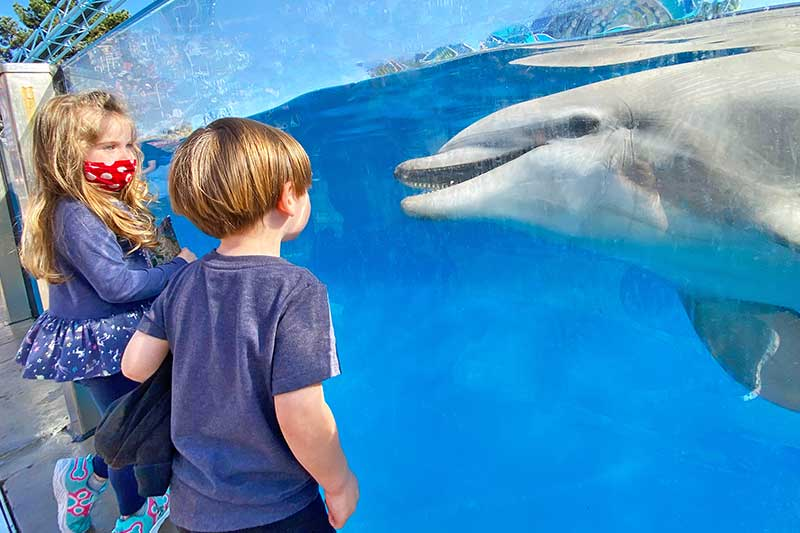 ~Toadally~ Terrific Tips for Taking Toddlers and Small Children to SeaWorld San Diego